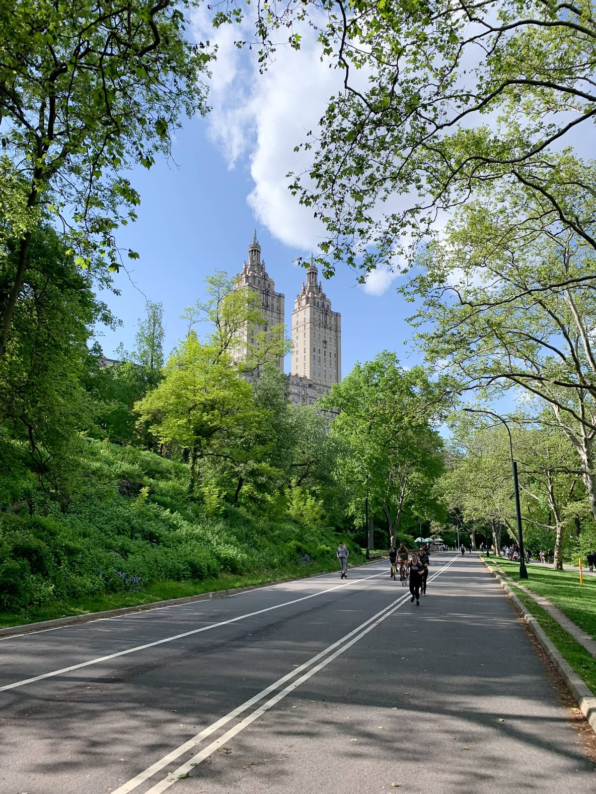 Central Park running path surrounded by green trees