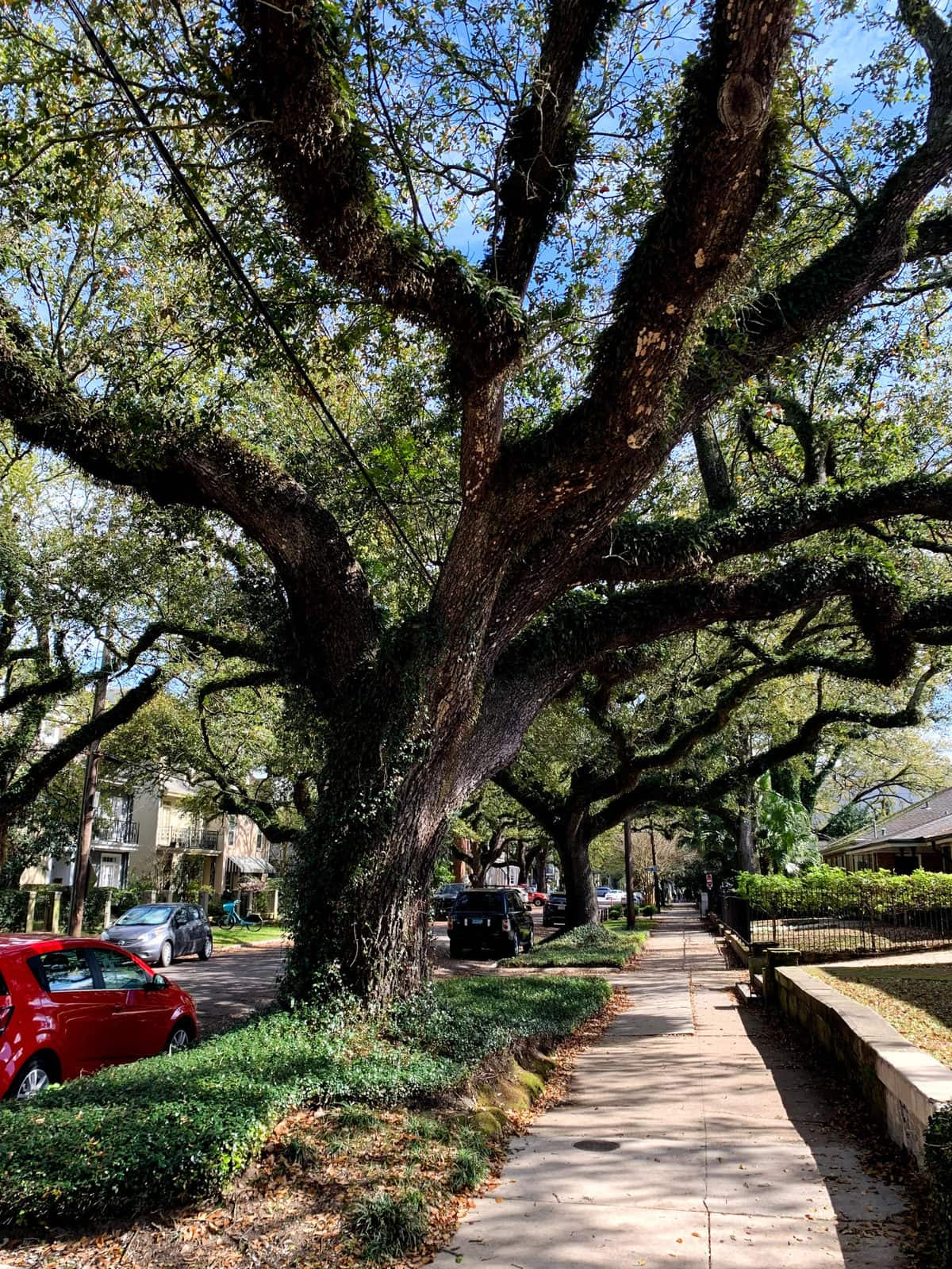 Tree in New Orleans